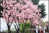 福爾摩莎:新竹市~東南街239巷汀甫圳賞櫻 (31).jpg