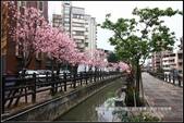 福爾摩莎:新竹市~東南街239巷汀甫圳賞櫻 (44).jpg
