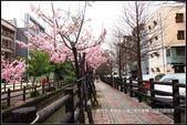 福爾摩莎:新竹市~東南街239巷汀甫圳賞櫻 (13).jpg