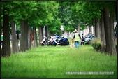 隨心所遇 :綠意盎然的玉山公園落羽松 (35).jpg