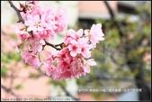 福爾摩莎:新竹市~東南街239巷汀甫圳賞櫻 (34).jpg