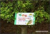 隨心所遇 :浮筧街落羽松 (9).jpg