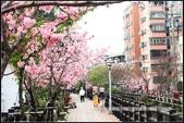 福爾摩莎:新竹市~東南街239巷汀甫圳賞櫻 (18).jpg