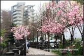 福爾摩莎:新竹市~東南街239巷汀甫圳賞櫻 (27).jpg