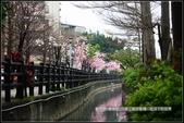 福爾摩莎:新竹市~東南街239巷汀甫圳賞櫻 (48).jpg