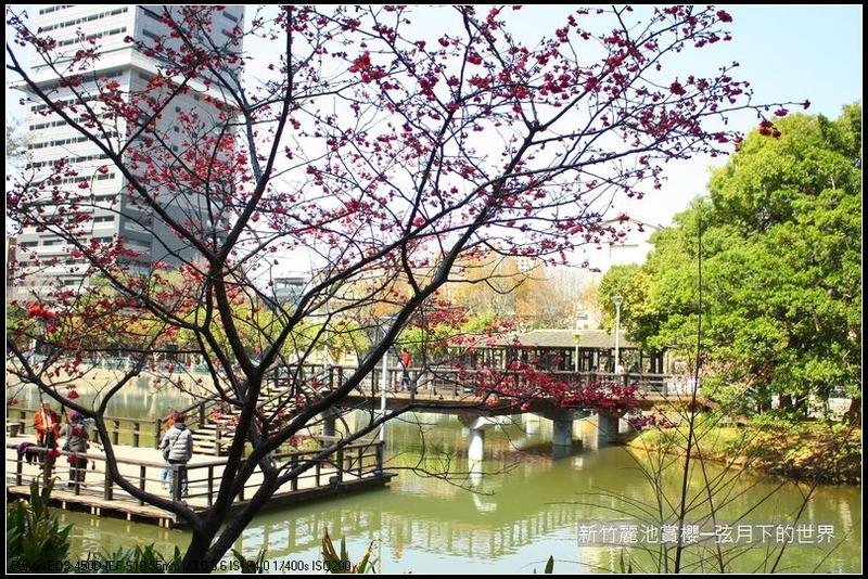 福爾摩莎:新竹~麗池公園賞櫻_17.JPG