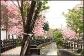 福爾摩莎:新竹市~東南街239巷汀甫圳賞櫻 (4).jpg