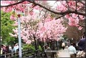 福爾摩莎:新竹市~東南街239巷汀甫圳賞櫻 (23).jpg