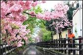 福爾摩莎:新竹市~東南街239巷汀甫圳賞櫻 (35).jpg