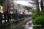 福爾摩莎:新竹市~東南街239巷汀甫圳賞櫻 (47).jpg