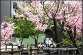 福爾摩莎:新竹市~東南街239巷汀甫圳賞櫻 (16).jpg
