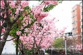 福爾摩莎:新竹市~東南街239巷汀甫圳賞櫻 (19).jpg