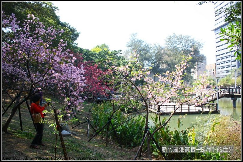 福爾摩莎:新竹~麗池公園賞櫻_16.JPG