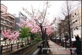 福爾摩莎:新竹市~東南街239巷汀甫圳賞櫻 (14).jpg