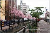 福爾摩莎:新竹市~東南街239巷汀甫圳賞櫻 (43).jpg