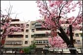 福爾摩莎:新竹市~東南街239巷汀甫圳賞櫻 (9).jpg