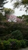 陽明山花季 107.3.3:14.jpg