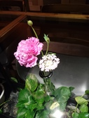 Fuji Flower Cafe 107.1.31:19.jpg