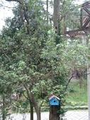 南投2天1夜 106.10.28~29:17.這裡的樹上好多像信箱的小木盒.jpg