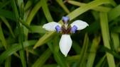 宜蘭綠博 107.4.7/14:很美的花