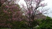 陽明山花季 107.3.3:20.jpg