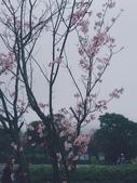陽明山花季 107.3.3:3.jpg