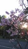 郵政特考前後的出遊 107.03:2.南港公園的櫻花.jpg