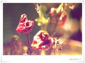 女同故事 / 環島預告【 傳遞幸福能量 】(請鎖定網誌消息):1842539477.jpg