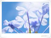 女同故事 / 環島預告【 傳遞幸福能量 】(請鎖定網誌消息):1842539478.jpg