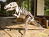 小葉收藏品:恐龍