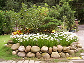 夢松園:蔥蘭