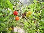 夢松園:夢松園植物