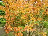 夢松園:夢松園的一種植物
