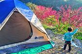 天空的家-3:2014農曆新年-我們在天空的家-享受寧靜-櫻花飛舞-滿星閃閃的露營