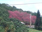 980207杏花林:DSC04652.JPG