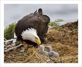 重點:mom-and-baby-eagle.jpg