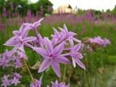 2014.07.05 觀音-寞內的花園:IMG_6620.JPG