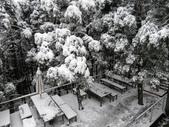 2016.01.24 三峽熊空賞雪:IMG_6177.JPG