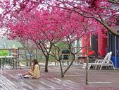 20200222三義櫻花渡假村~八甲茶園:ice_2020-02-22-19-20-20-915.jpg