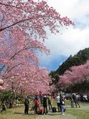 20200215恩愛農場富士櫻:ice_2020-02-15-21-05-28-315.jpg