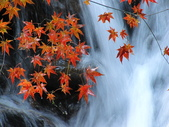 紅楓谷:IMG_7781.JPG