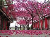 20200222三義櫻花渡假村~八甲茶園:ice_2020-02-22-19-31-23-763.jpg