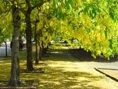 2016.05.29 麟洛公園-阿勃勒:IMG_4964.JPG