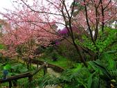 2013.02.14 紫微森林:IMG_0001.JPG