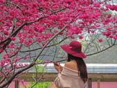 20200222三義櫻花渡假村~八甲茶園:ice_2020-02-22-19-25-36-131.jpg