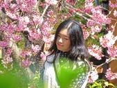 20200215恩愛農場富士櫻:ice_2020-02-15-21-04-08-754.jpg