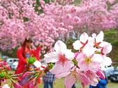 20200215恩愛農場富士櫻:ice_2020-02-15-20-45-28-626.jpg