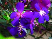 2013.02.14 紫微森林:IMG_0008.JPG