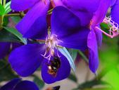 2013.02.14 紫微森林:IMG_0009.JPG