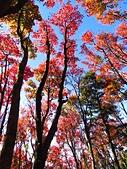 2016.12.25 稍來山紅榨槭:IMG_2302.jpg